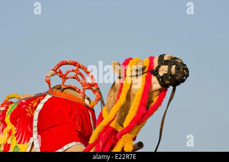 Tête et cou camel décoré de pompons colorés, des colliers et des perles, de 26b2ba5c9ea