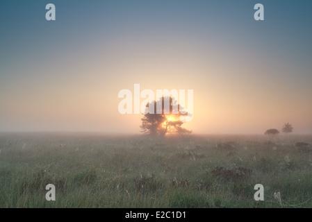 Lever du soleil derrière arbre sur marais brumeux en été Banque D'Images