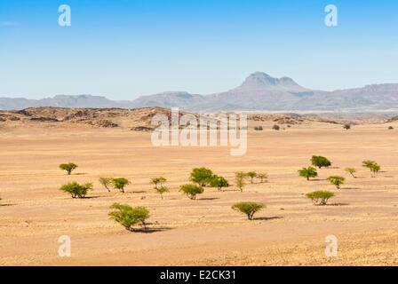 La Namibie, région de Kunene, Damaraland