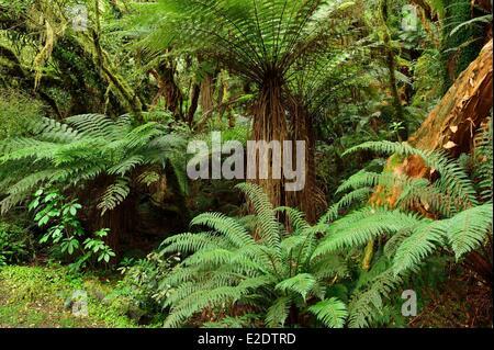 L'île du Sud Nouvelle-zélande hors des sentiers battus Catlins sentiers le long de la côte sud sur la voie de l'McLean Banque D'Images
