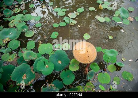 L'INDONÉSIE, Bali, Ubud, Temple Royal, étang avec fleurs de lotus Banque D'Images