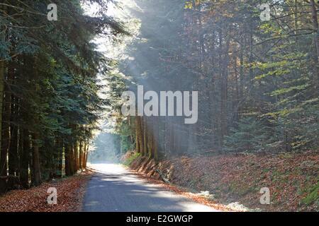 France Puy de Dôme Parc naturel regional Livradois Forez (parc naturel régional du Livradois Forez) petite route en forêt près de Echandelys