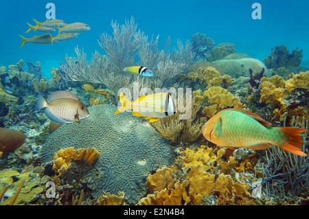 Paysage sous-marin dans un récif corallien sain avec des poissons tropicaux colorés Banque D'Images