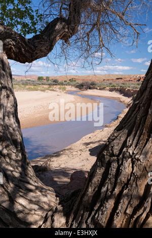Paria River et le peuplier arbre dans le désert de l'Utah du sud.