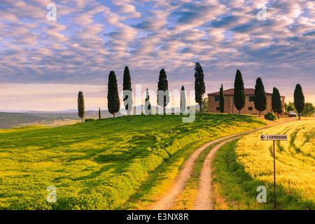 Podere I Cipressini avec le célèbre cyprès au coeur de la Toscane, près de Pienza, Italie Banque D'Images