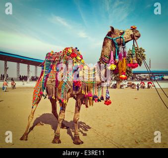 Retro Vintage style hipster image voyage de chameau décoré à Pushkar Mela (chameau de Pushkar Fair). Pushkar, Rajasthan, Banque D'Images