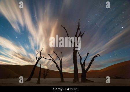Stars et menaces sur l'acacia arbres morts dans Dead Vlei.Sossusvlei, Namibie Banque D'Images