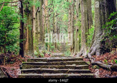 Kumano Kodo à Daimon-zaka, un sentier sacré désigné comme site du patrimoine mondial de l'UNESCO dans la région de Nachi, Wakayama, Japon.