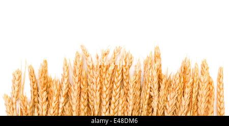 Les épis de blé d'or de la gerbe, sur fond blanc Banque D'Images
