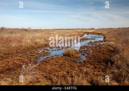 Les marais et les ruisseaux de marée, Borkum, îles de la Frise orientale, Frise orientale, Basse-Saxe, Allemagne, Banque D'Images
