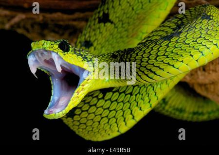 Attaque de serpent!