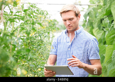 Agriculteur en émissions de contrôler les plants de tomates Using Digital Tablet Banque D'Images