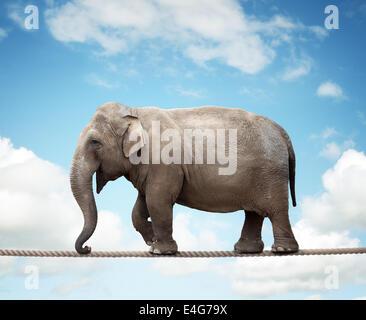 Sur l'éléphant funambule Banque D'Images