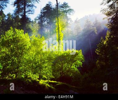 Effet Retro Vintage style hipster image filtrée voyage de forêt le matin avec les rayons du soleil - fraîcheur concept