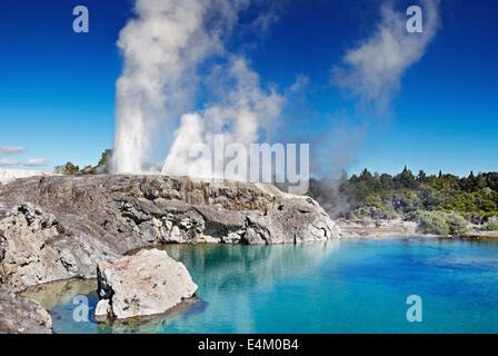 Pohutu geyser, la vallée thermale de Whakarewarewa, Rotorua, Nouvelle-Zélande Banque D'Images