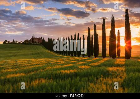 Au coeur de la Toscane, dans la campagne du Val d'Orcia, se trouve l'Agriturismo Poggio Covili Banque D'Images