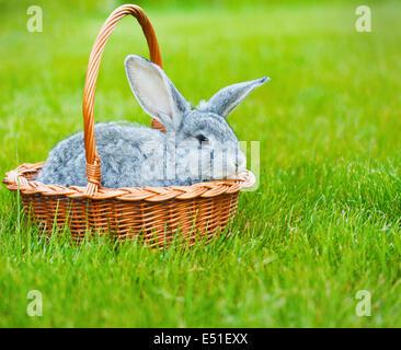 Mignon petit lapin gris sur l'herbe verte Banque D'Images
