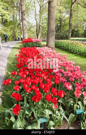 Suppression des tulipes, impression rouge 'rouge' et 'Design rose Impression', dans les jardins de Keukenhof, lisse, Banque D'Images