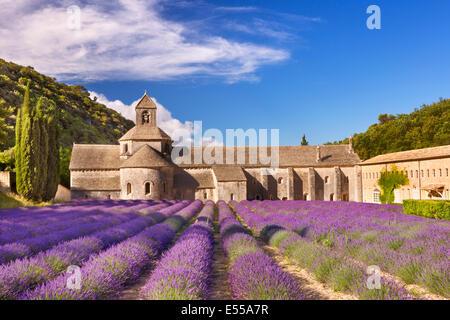 L'Abbaye de Sénanque en Provence, France de fleurs de lavande Banque D'Images