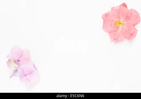 Rose rose, hortensia reservoir close up, de la lumière de fond de papier, carte postale Banque D'Images