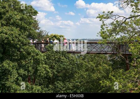 Kew Gardens Xstrata Treetop Walkway Banque D'Images
