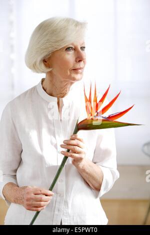 Femme âgée holding Bird of Paradise flower. Banque D'Images