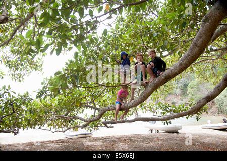 Portrait de jeune fille et trois frères assis dans tree at beach Banque D'Images
