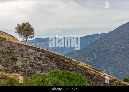 Paysage avec lonely tree sur les pentes des montagnes rocheuses Banque D'Images