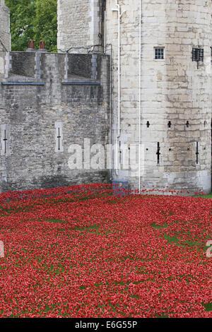 Les terres et les mers de sang ont balayé de rouge, marquant le centenaire de la déclaration de la Première Guerre Banque D'Images