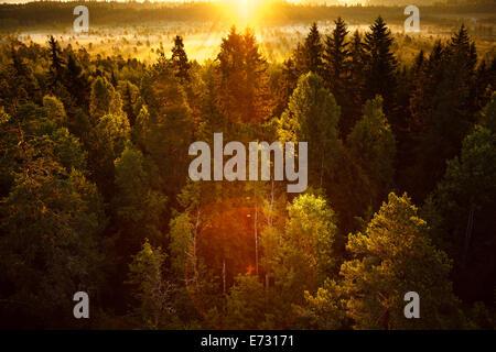 Lever de soleil sur un matin tôt dans le marais de la Finlande. La lumière du soleil frappant sur la forêt à très Banque D'Images