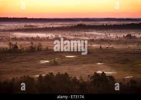 Brouillard pourpre couvrant les Torronsuo marais en Finlande sur un matin tôt. Le soleil est prêt à se lever juste Banque D'Images