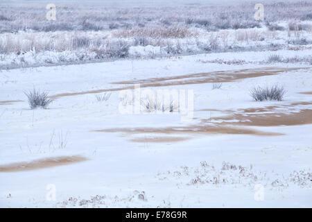 Marécage gelé en hiver blanc neige Banque D'Images