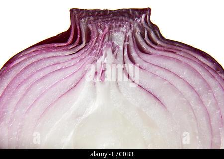 Oignon rouge libre isolé en fond blanc Banque D'Images