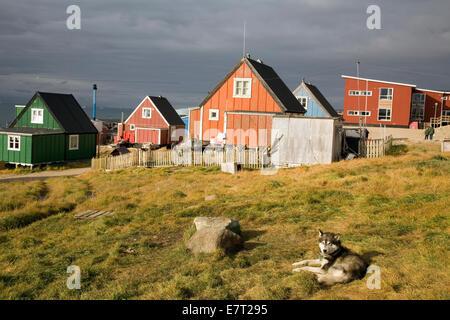 """Un chien de traîneau se détend à Qaanaaq, aussi connu sous le nom de """"nouvelle Thulé, Groenland' Banque D'Images"""
