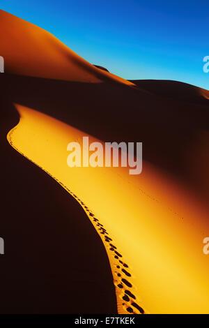 Dune de sable avec des empreintes au lever du soleil, désert du Sahara, l'Algérie Banque D'Images