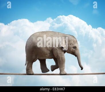 Elephant calf on tightrope Banque D'Images