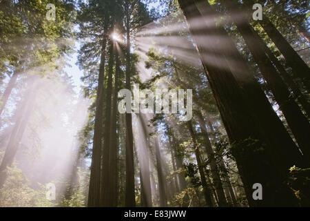 Du soleil dans la forêt du Lady Bird Johnson grove Banque D'Images