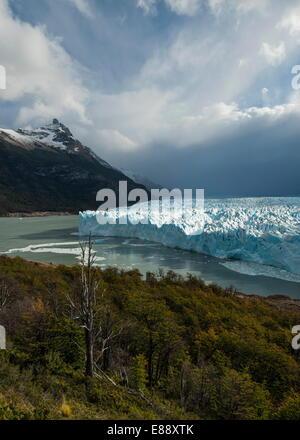 La lumière de l'après-midi sur le glacier Perito Moreno, le Parc National Los Glaciares, Site de l'UNESCO, en Patagonie, Banque D'Images
