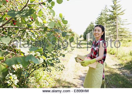 Femme souriante avec fort d'apples in orchard Banque D'Images