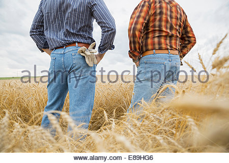 Les agriculteurs l'article in wheat field Banque D'Images