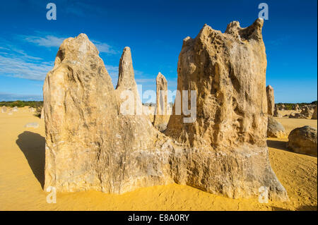 Les formations calcaires, le Parc National de Nambung, Australie occidentale Banque D'Images