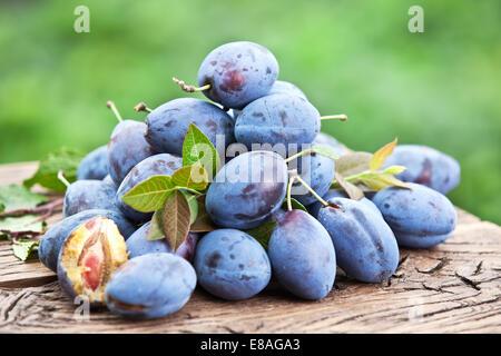 Les prunes sur une vieille table en bois dans le jardin. Banque D'Images