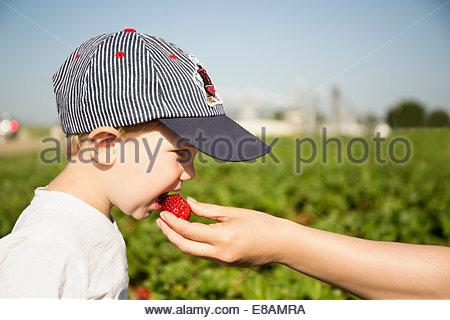 Part de l'alimentation à la fraise mère petit garçon en champ de fraises Banque D'Images