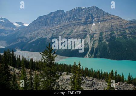Le lac Peyto et sommet Bow, Rocheuses, Canada Banque D'Images