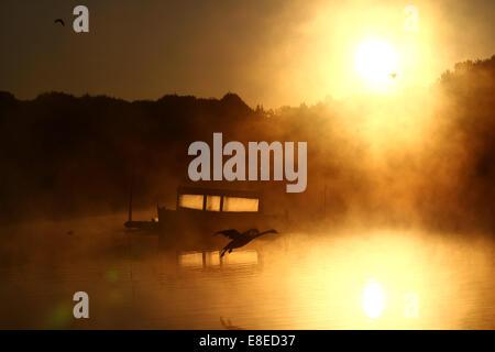 Peterborough (Cambridgeshire, Angleterre. 5 octobre, 2014. Un cygne sur à la terre comme un bateau, c'est illuminé Banque D'Images