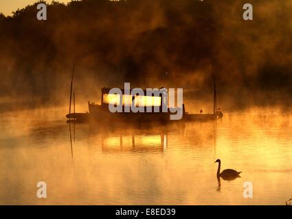 Peterborough (Cambridgeshire, Angleterre. 5 octobre, 2014. Un cygne glisse par comme un bateau, c'est illuminé par Banque D'Images