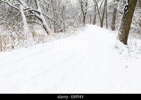 USA, DuPage Comté (Illinois), le chemin de forêt à l'hiver Banque D'Images