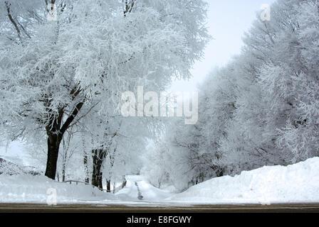 Vide, chemin bordé d'arbres dans la neige, Minnesota, États-Unis Banque D'Images