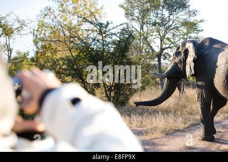 Femme sur safari photo en Afrique du Sud, de l'éléphant Banque D'Images