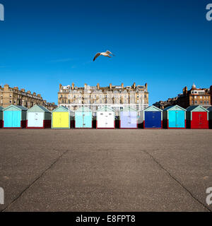 Multi-couleur rangée de cabines de plage, Brighton, England, UK Banque D'Images